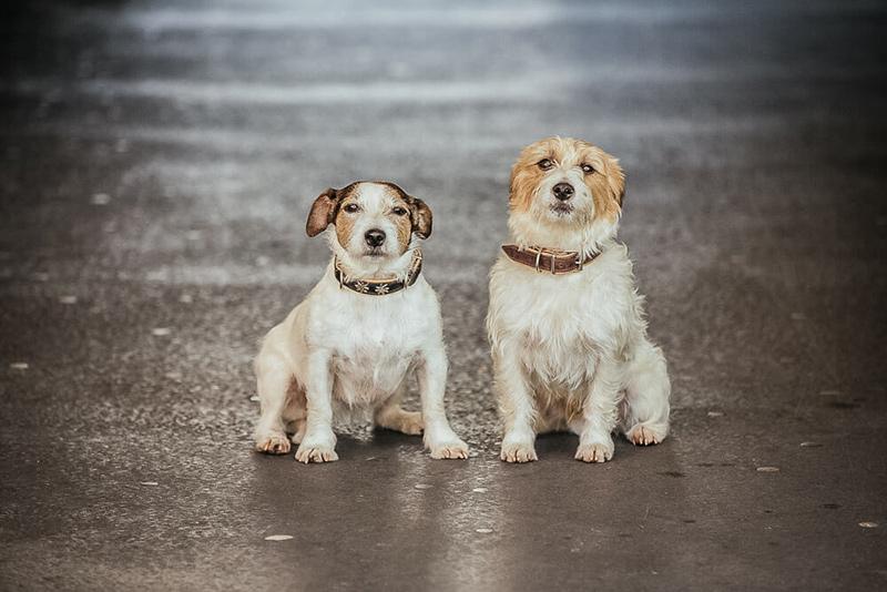 Susi & Milo